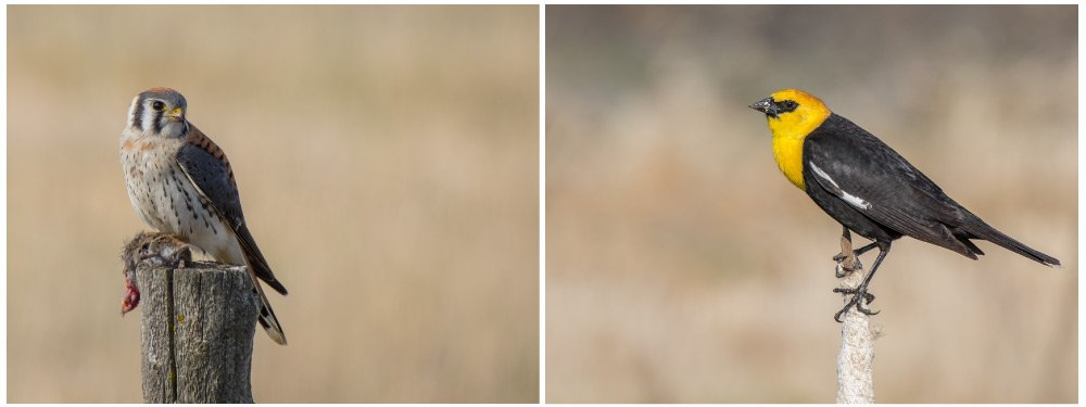 lumix g lense 100 400 sample zoomcamera 0