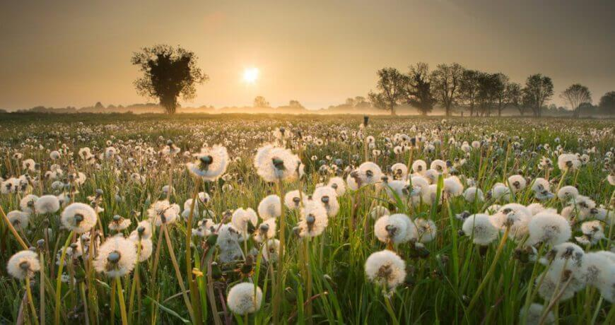 Tip 5 Reason Take Beauty Nature Photography Content 0