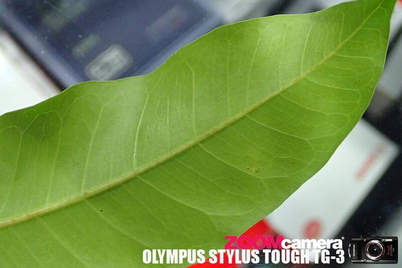 Olympus TG3 Macro Test 11
