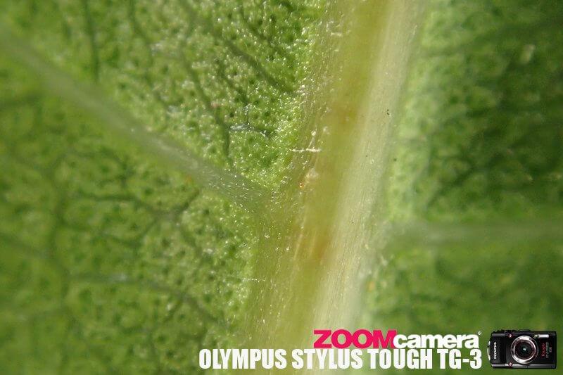Olympus TG3 Macro Test 12