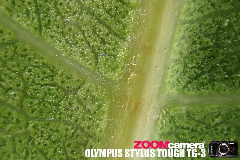 Olympus TG3 Macro Test 13