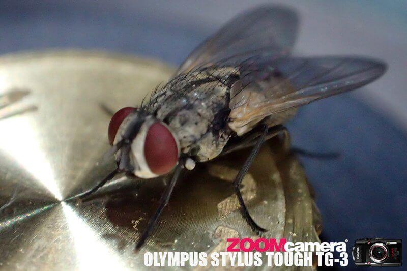 Olympus TG3 Macro Test 4