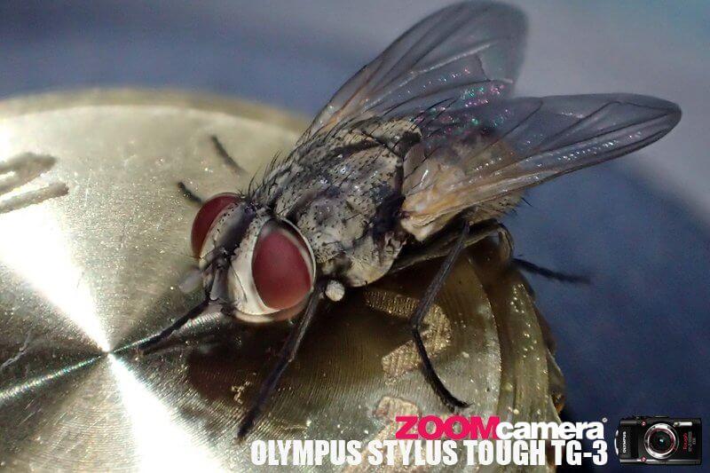 Olympus TG3 Macro Test 5