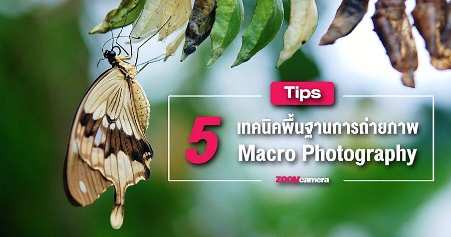 Tips : 5 เทคนิคเบื้องต้นของการถ่าย Macro ที่ควรรู้