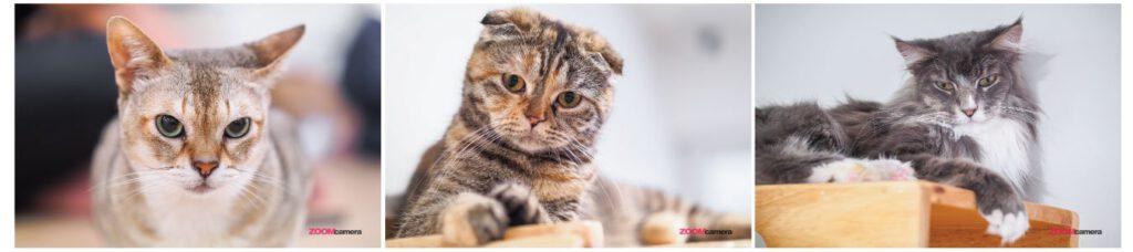 Tutorial Cat 8