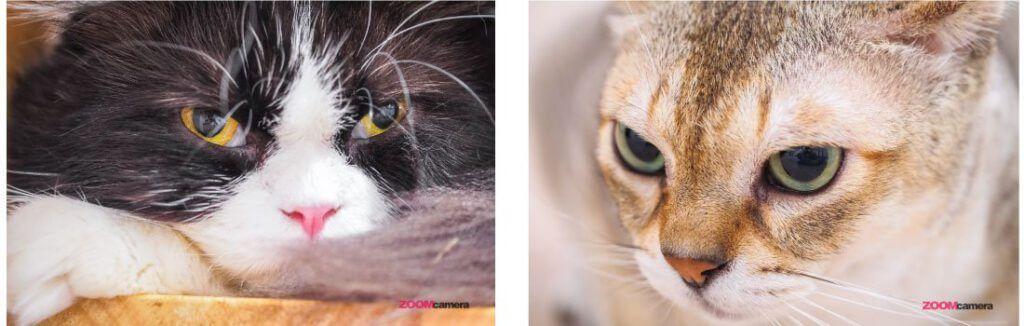 Tutorial Cat 9