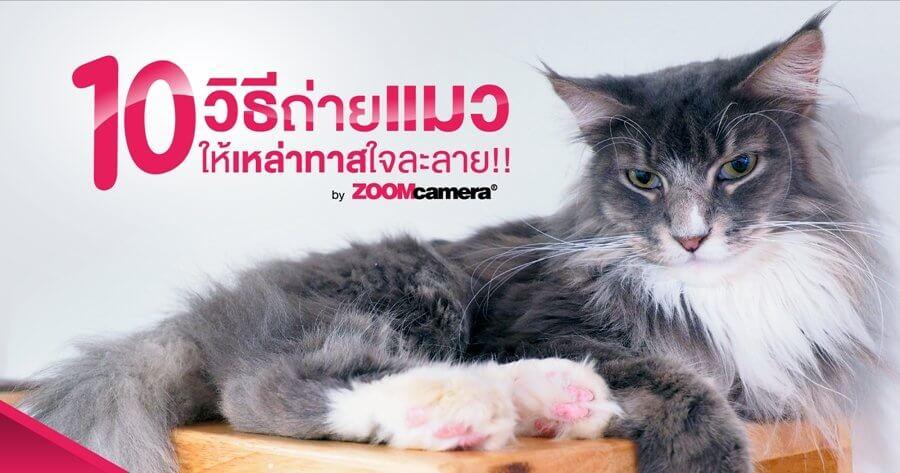 aw cat photography FB