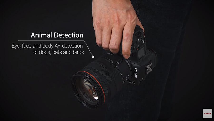 Canon EOS R5 Animal detection