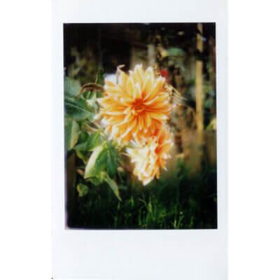 Mint Camera InstantFlex TL70 2.0 Instant Film Camera 34