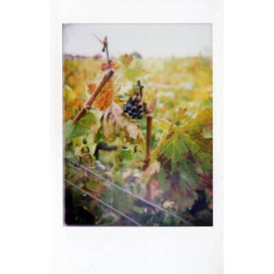 Mint Camera InstantFlex TL70 2.0 Instant Film Camera 35