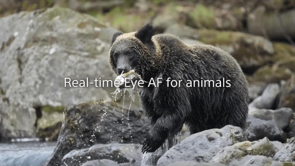 สรุปสเปก Sony Alpha 1 Animal AF