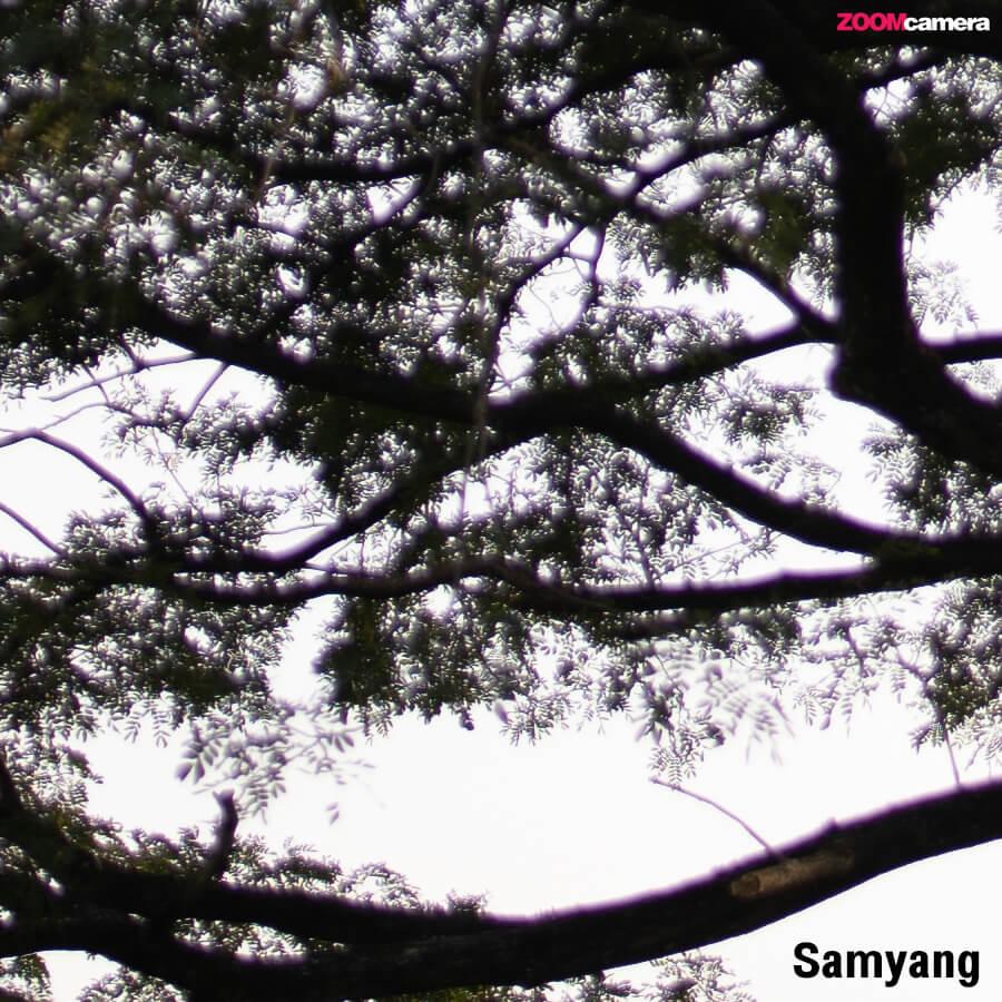 SAMYANG AF 35mm F1.4 ISO 100 1 4000 sec at f 1.4 100 percent crop 1